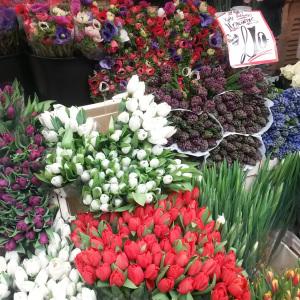 Tulips, Columbia Road Market, Sundays